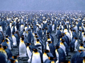 a_million_penguins_1