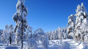 SNOW SNOW SNOW SNOW