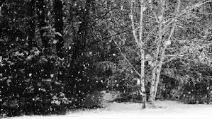 snowtree12121212