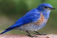 bluebirdxxxxxxxxx