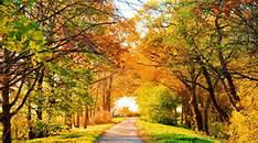 autumnwwwwwwwww