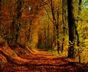 autumnxxxxxxxxxxxxxxx