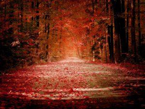 description-of-autumn