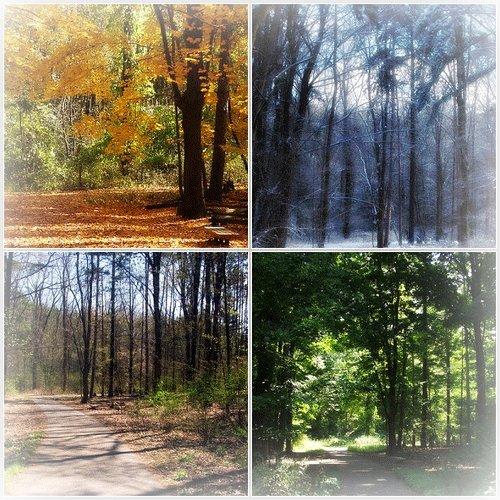 გაზაფხული, ზაფხული, შემოდგომა, ზამთარი