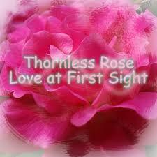 rosesssssssssssssssssssssssssss