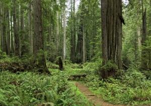 RedwoodsNPForest_hero_ErikPawassar_1280x642_1